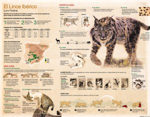 El Lince Ibérico - Ramón Azañón - Infografía