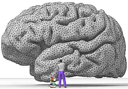 cerebro_humano_5
